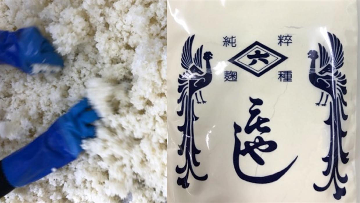 冷ましたお米に麹菌を種付けする